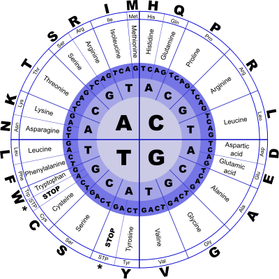 genetic_code_wheel